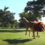 ライオンが公園に?ドッキリの意外な結末