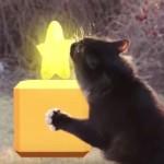 【猫動画】マリオとコラボした猫が可愛いすぎる