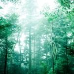 オーストラリアの森で遭難した女性が生還!ブッシュクラフトって何?